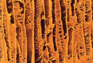 Волокна дерева под микроскопом